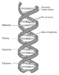 ADN HUmano es en gran parte extraterrestre, miren estos dato