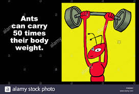 education illustration of an ant lifting a dumbbell