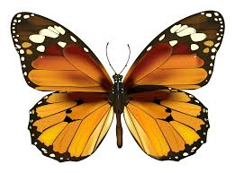 butterfly free download clip art free clip art on clipart