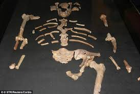 film lucy australopithèque why was a baboon bone found in lucy s skeleton scientists make