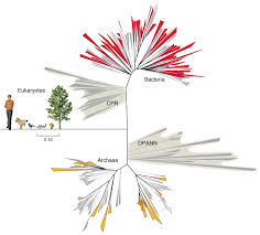Tree Of Life groups of bacteria are mixing up the tree of life