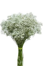 Bulk Baby S Breath Gypsophila Million Star Baby U0027s Breath Million Stars Bulk Baby