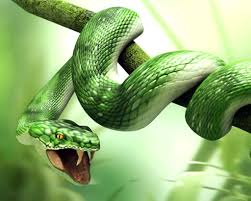 a green snake wallpapers snakes pictures dangerous snakes pictures
