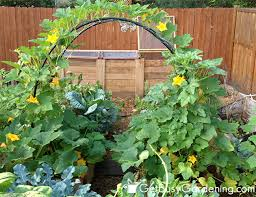 Growing Melons On A Trellis How To Build A Squash Arch