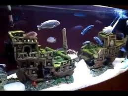 aquarium cichlids and catfish in galleon shipwreck