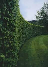 living plants garden wall designs outdoor garden wall designs