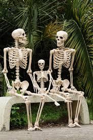 mr bones life sized skeleton pottery barn halloween decor