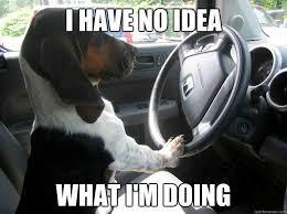 Dog Driving Meme - driving dog memes quickmeme