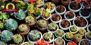 succelents 25 succulent plant types different kinds of succulents list