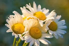 free images nature blossom flower petal bouquet botany