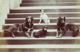 a history of royal dogs the royal family