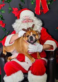 dogs u0026 cat meeting santa claws album on imgur