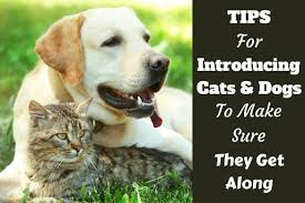 how to introduce cats and dogs and make sure they get along