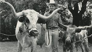 the real history of thanksgiving the truth about bevo texas exes