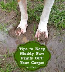 Mud Rugs For Dogs 4 Tips To Keep Muddy Paw Prints Off Your Carpet Pawsitively Pets