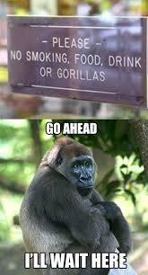 Funny Gorilla Memes - no gorillas humor hilarious and stuffing