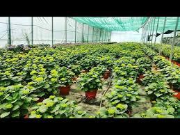 hydroponics vegetable plants system youtube