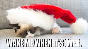 Grumpy Cat Memes Christmas - days of christmas with grumpy cat