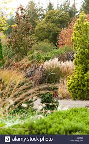 ornamental grasses and other plants in the foliage and plantsman s