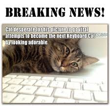 Keyboard Cat Meme - cat desperate to become next keyboard or grumpy cat declares a