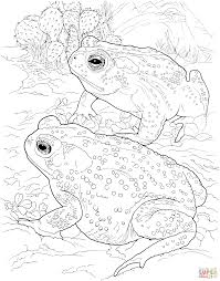 sonoran desert toad coloring free printable coloring pages