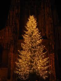 free images branch night dark church lighting christmas