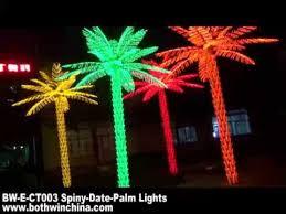 spiny date palm tree lights youtube