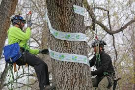 Emerald Ash Borer Map News About Emerald Ash Borers Be A Smart Ash