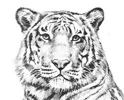 Tiger Coloring Pages Printable Adult Of Pictures We Are All Coloring Pages Tiger