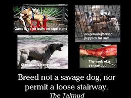 Pitbull Meme - the first church of pit bulls breed not a savage dog sunday