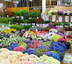 Flowers Wholesale Fresh Arrivals The Los Angeles Flower Market Page 7