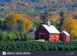 vermont christmas tree farms christmas lights decoration