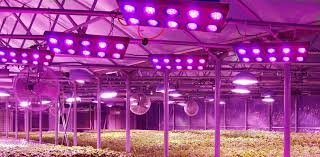 commercial led grow lights led lighting for horticulture sees growth in japan with newly