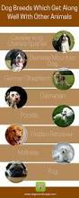australian shepherd ipod 5 case english languages tappytaps u2013 smart mobile apps