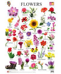 flower chart each flower speaks for itself description from