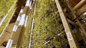 vertical growing increases efficiency and yield at colorado