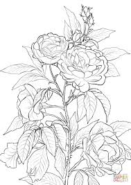 rose coloring free printable coloring pages