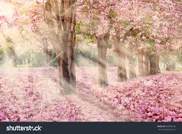 falling petal over tunnel pink flower stock photo 604961132