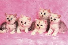 Cute Pink Pictures by Cats Look Blanket Kitties Lovely Cat Friends Adorable Buddies