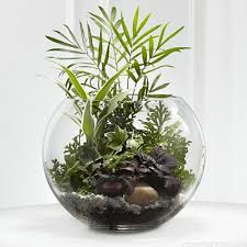 Goldfish Bowl Vase Fish Bowl Plant 25 Best Betta Fish Bowl Ideas On Pinterest Vase