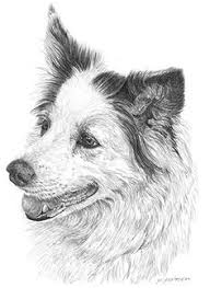 original a4 pencil wildlife animal drawing by beeelliottanimalart