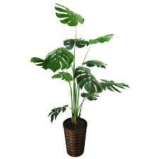 floor plants home decor lcg florals spanish moss split leaf philodendron floor plant in