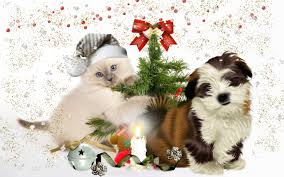 cute dog christmas wallpapers christmas dog pictures wallpaper 61 images