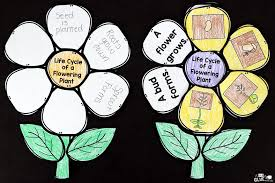 Life Cycle Of A Flowering Plant - flowering plant life cycle craftivity a dab of glue will do