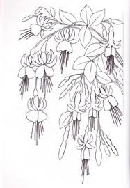 hibiscus coloring pages pictures flower coloring pages