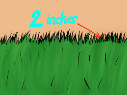 how to take care of sod 5 steps with pictures wikihow