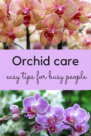 Orchids Facts by Orchid Care How To Stop Feeling Guilty And Love Your Orchid