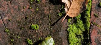 Moss Cleaner For Patios Cleaning Moss From Bricks Doityourself Com