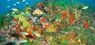 flower garden banks national marine sanctuary expansion proposed