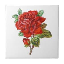 elegant red rose ceramic tiles zazzle